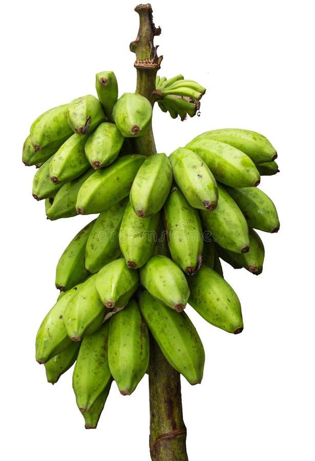 Groene banaanbos geïsoleerd op witte achtergrond stock afbeelding