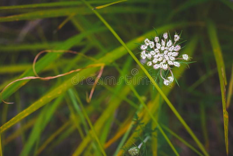 Groene beautifu; plase van de ontspanningsaard stock foto's