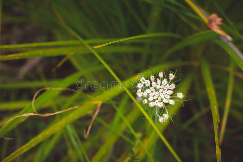 Groene beautifu; plase van de ontspanningsaard stock afbeelding