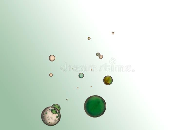 Groene Bellen stock foto