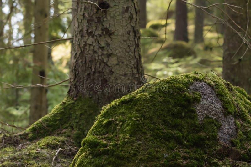 Groene bemoste bosgrond stock afbeelding