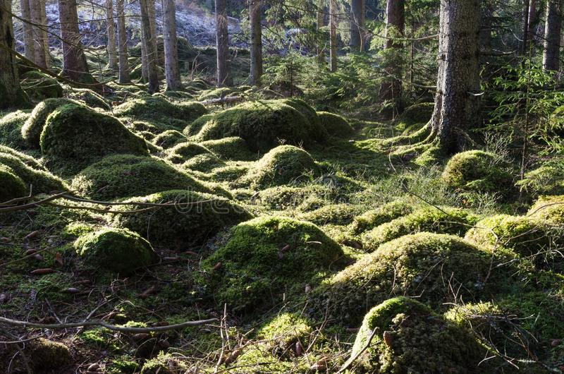 Groene bemoste bosgrond stock afbeeldingen