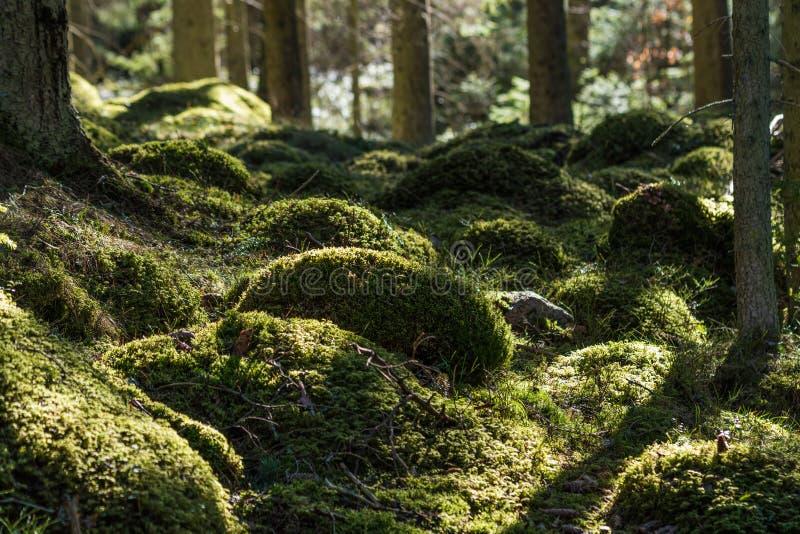 Groene bemoste bosgrond stock foto's