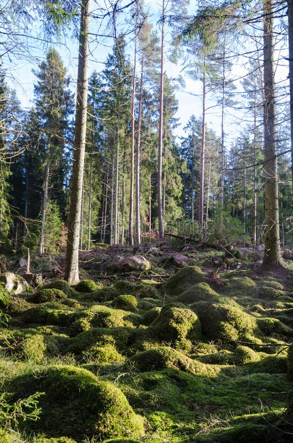 Groene bemoste grond in het hout stock fotografie