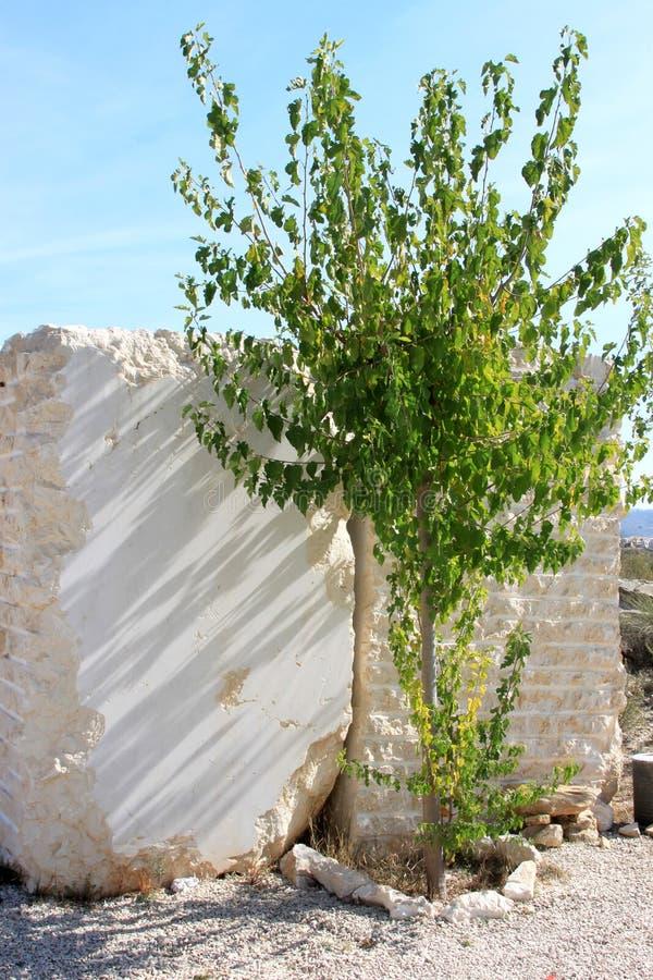 Groene berk en marmeren blokken in Murcia, Spanje stock afbeeldingen