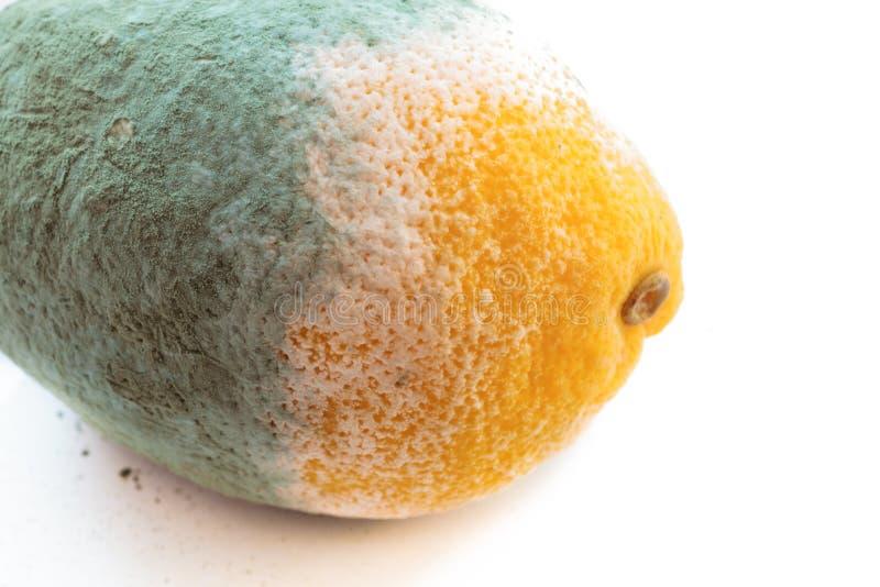 Groene beschimmelde geïsoleerde citroencitrusvruchten. Beschadigd voedsel. royalty-vrije stock foto's