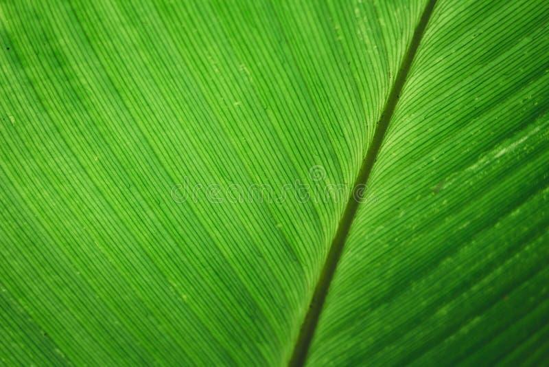 Groene blad achtergrond Groene bladachtergrond royalty-vrije stock foto