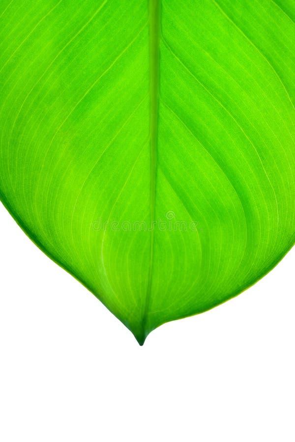 Download Groene Blad Dichte Omhooggaand Stock Afbeelding - Afbeelding bestaande uit botanisch, naughty: 29502093