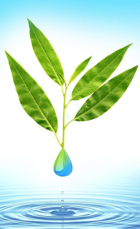 Groene blad en waterdaling royalty-vrije stock fotografie