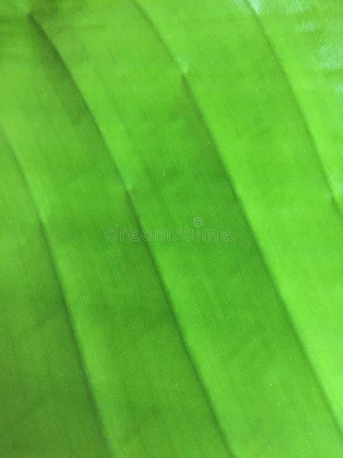 Groene Blad Tropische Installatie royalty-vrije stock fotografie