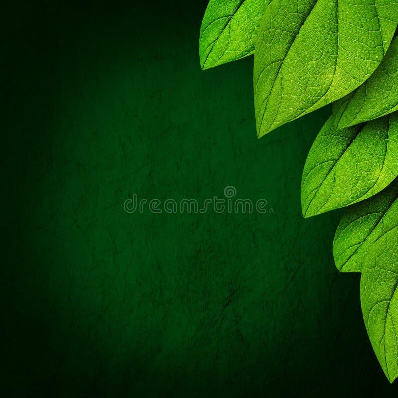 Groene bladachtergrond stock illustratie