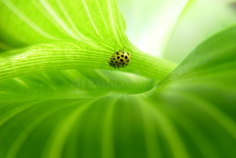 Groene bladachtergrond stock foto's