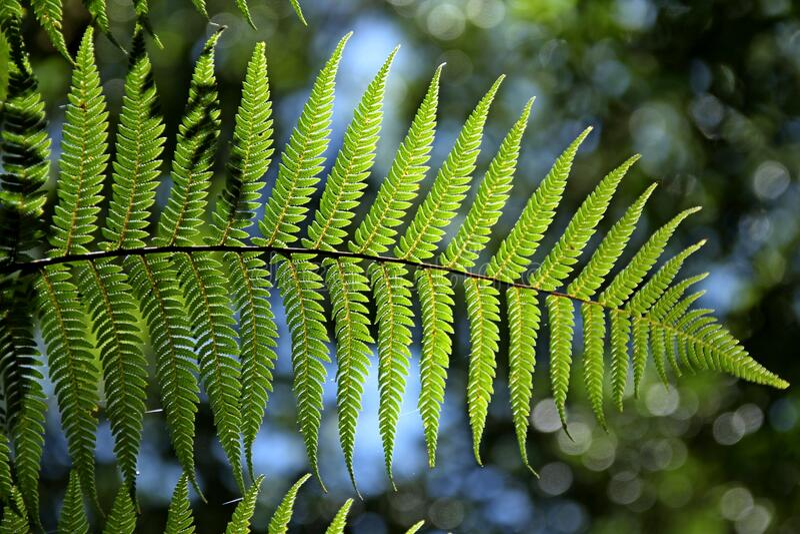 Groene bladboom stock foto's