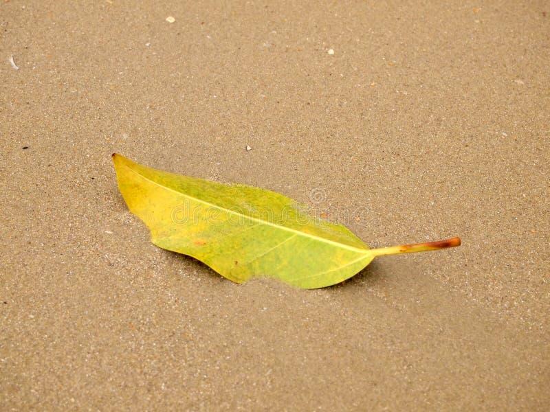 Groene bladdaling op zandstrand stock foto's