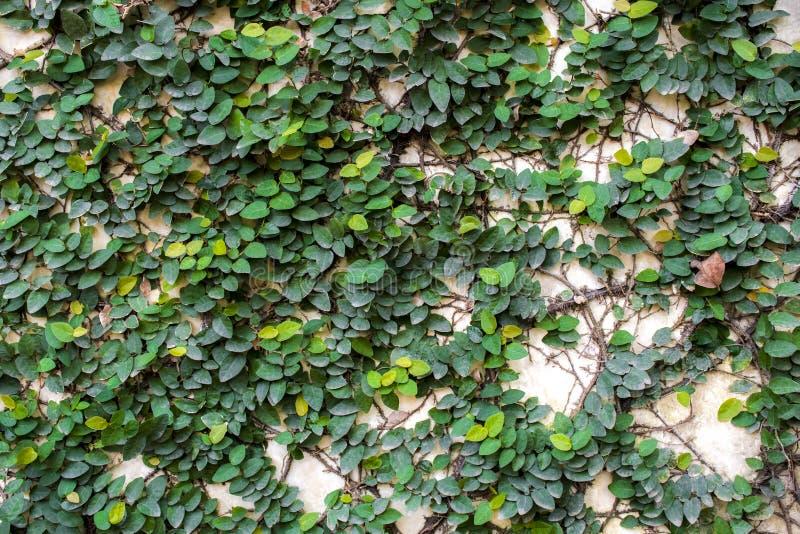Groene bladdia's langs grijze concrete muur stock foto's