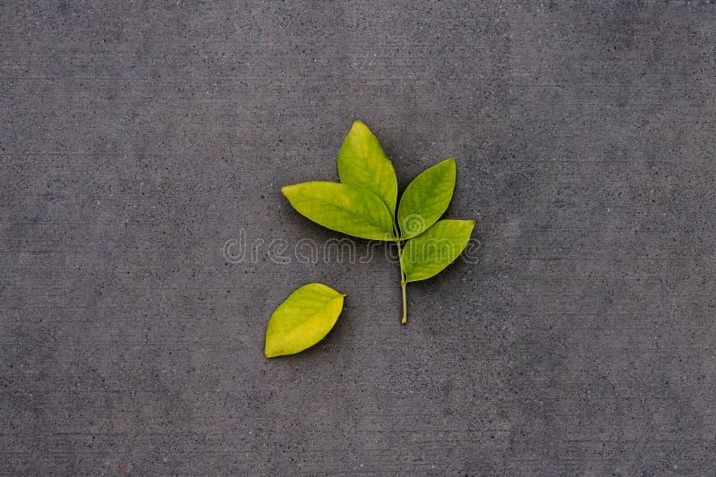 Groene bladeren - één apart royalty-vrije stock afbeeldingen