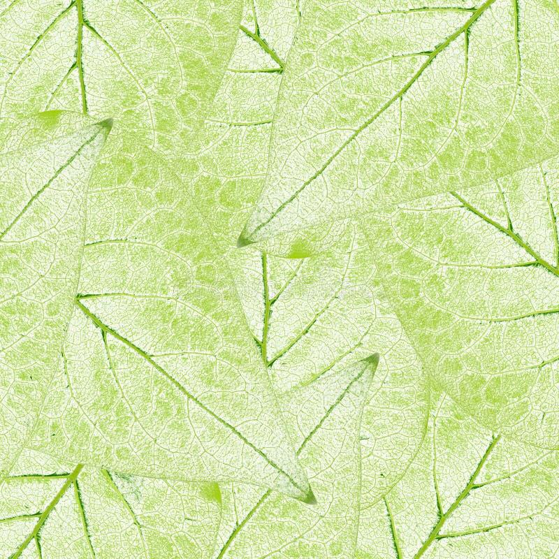Groene bladeren vector illustratie