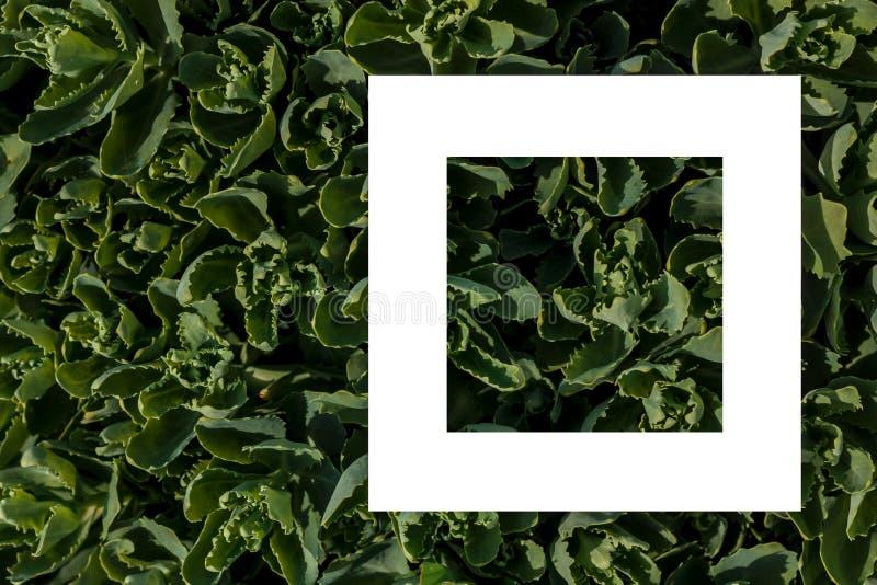 Groene bladeren als achtergrond en een wit blad van document voor het etiket royalty-vrije stock fotografie
