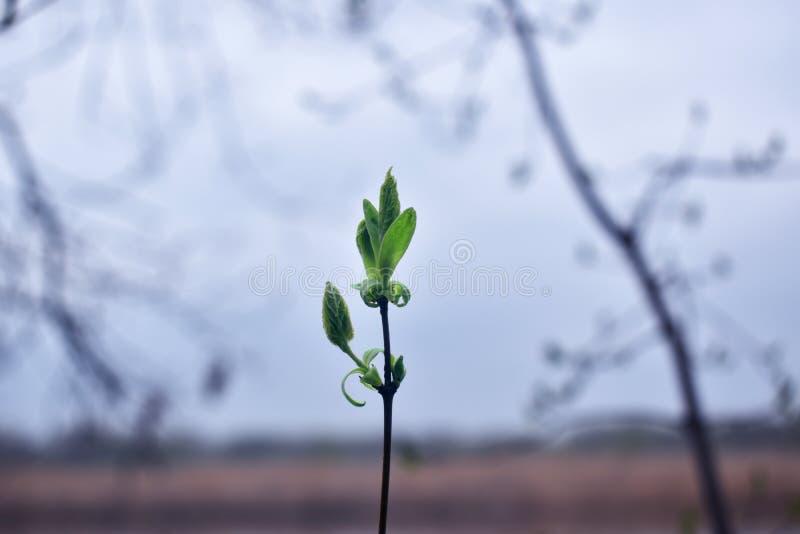 groene bladeren bovenop een tak stock afbeeldingen