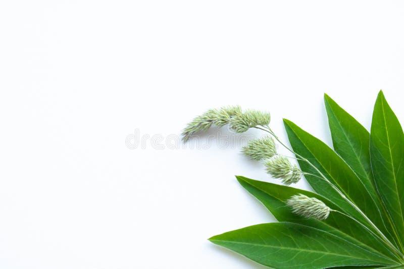 Groene bladeren in de hoek van de witte achtergrond stock foto