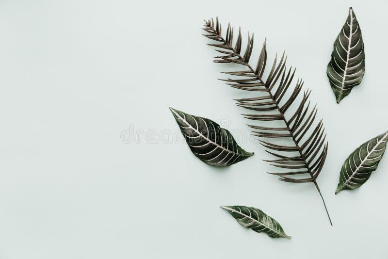 groene Bladeren De neutrale Minimalistische Vlakte legt Scène met tropisch stock afbeeldingen