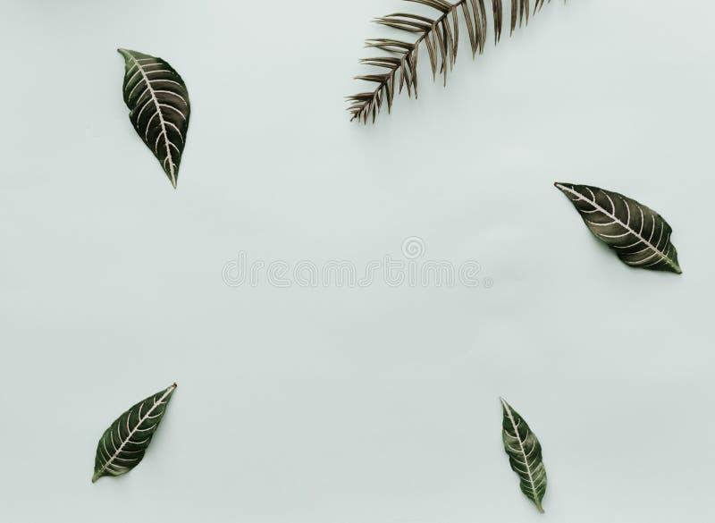 groene Bladeren De neutrale Minimalistische Vlakte legt Scène met tropische elementen stock afbeelding