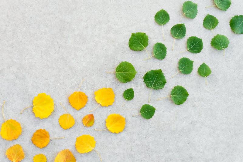 Groene bladeren die geel worden stock foto