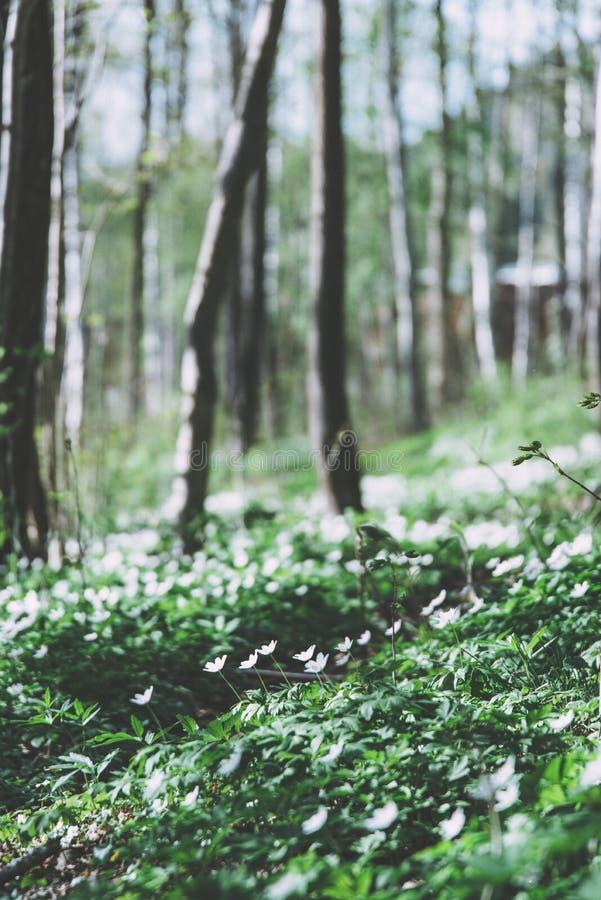 Groene bladeren in donkergroen bos met witte bloemen royalty-vrije stock afbeelding
