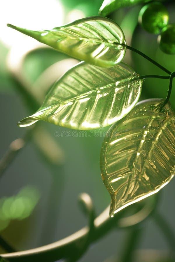 Groene bladeren en bessen royalty-vrije stock afbeelding
