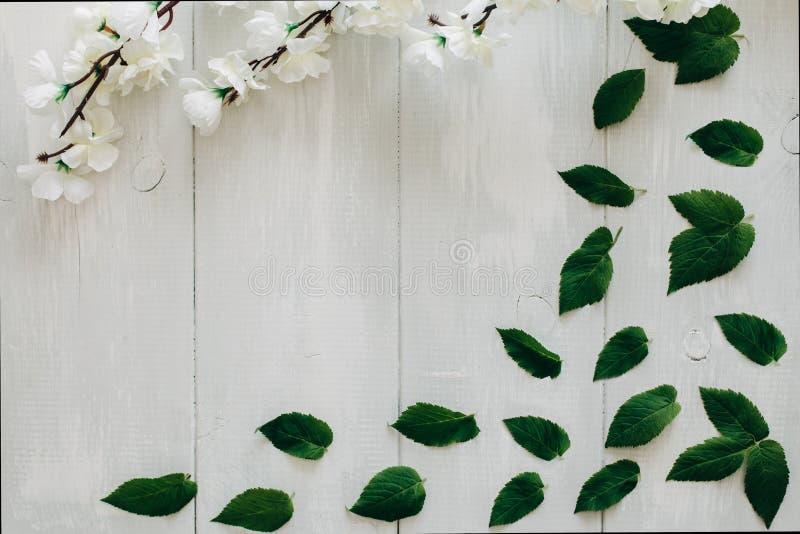 Groene bladeren en sakuratak op het witte houten bureau op achtergrond Vlak leg, hoogste mening royalty-vrije stock afbeelding