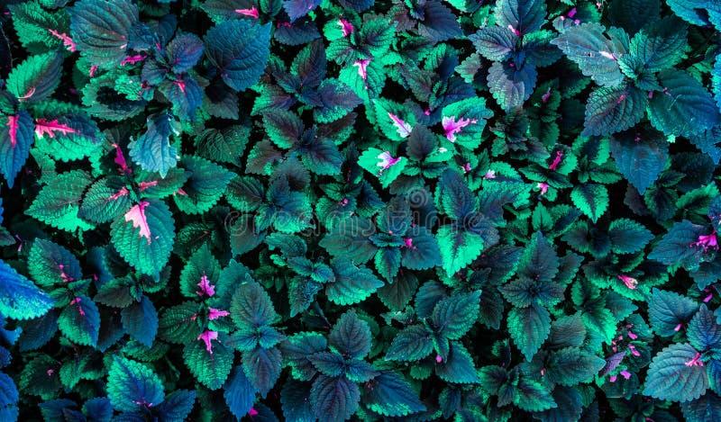 Groene bladeren hoogste mening als achtergrond royalty-vrije stock afbeelding