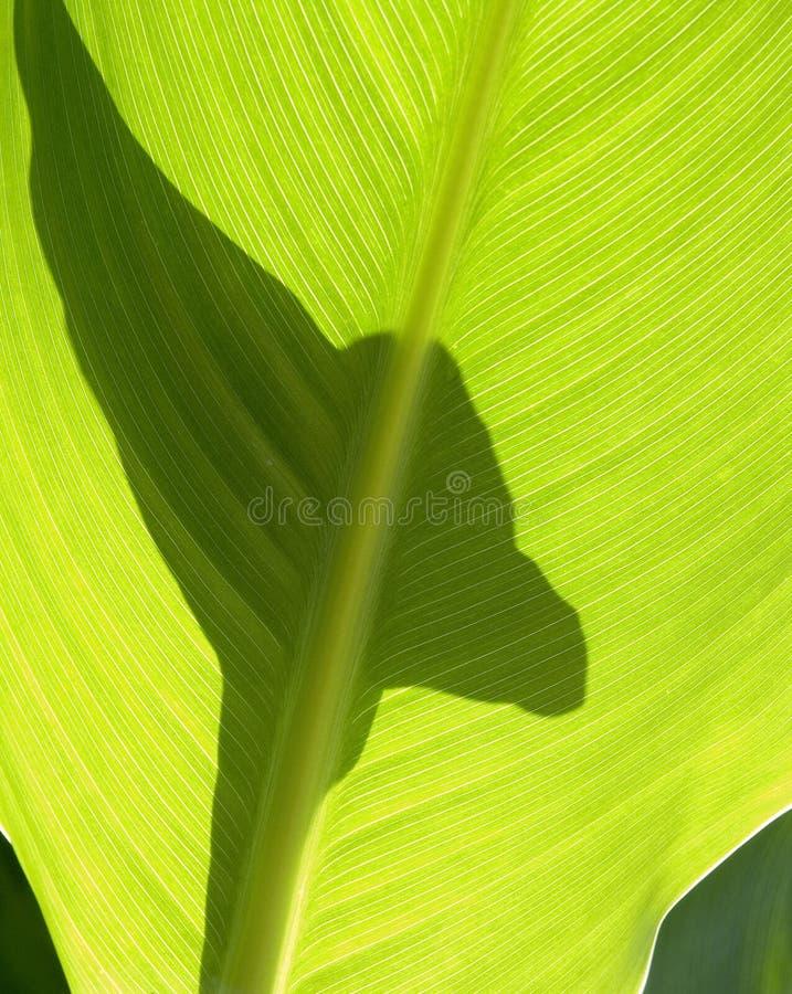 Groene bladeren II royalty-vrije stock afbeelding