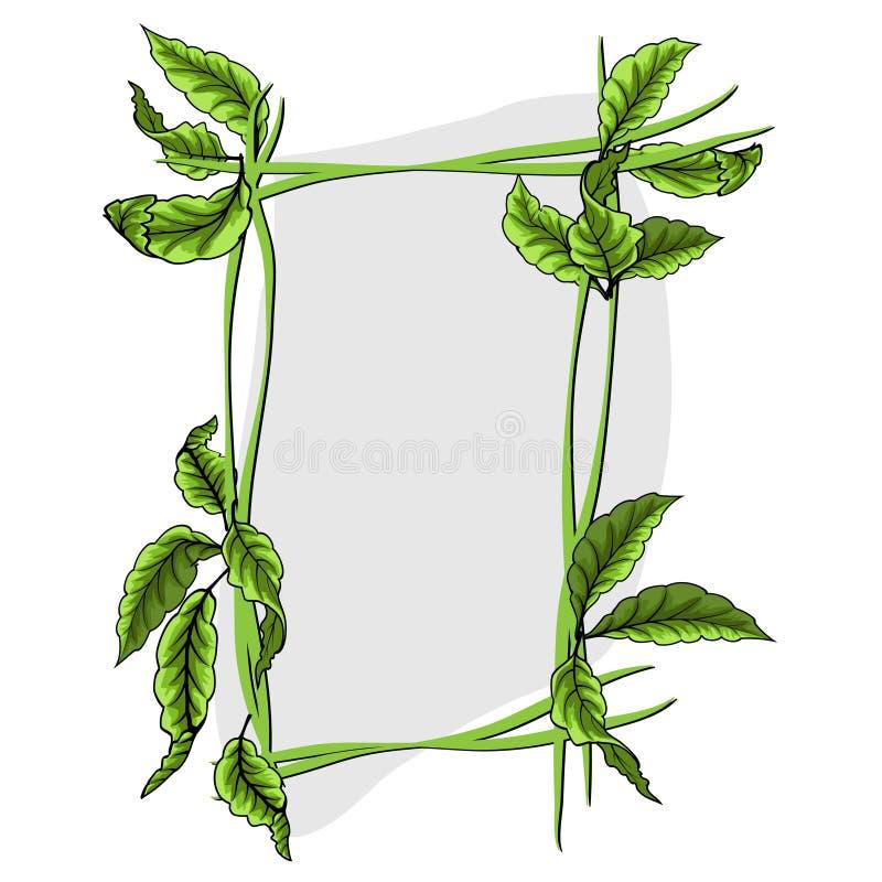 Groene bladeren met kader Vector illustratie Eps 10 vector illustratie