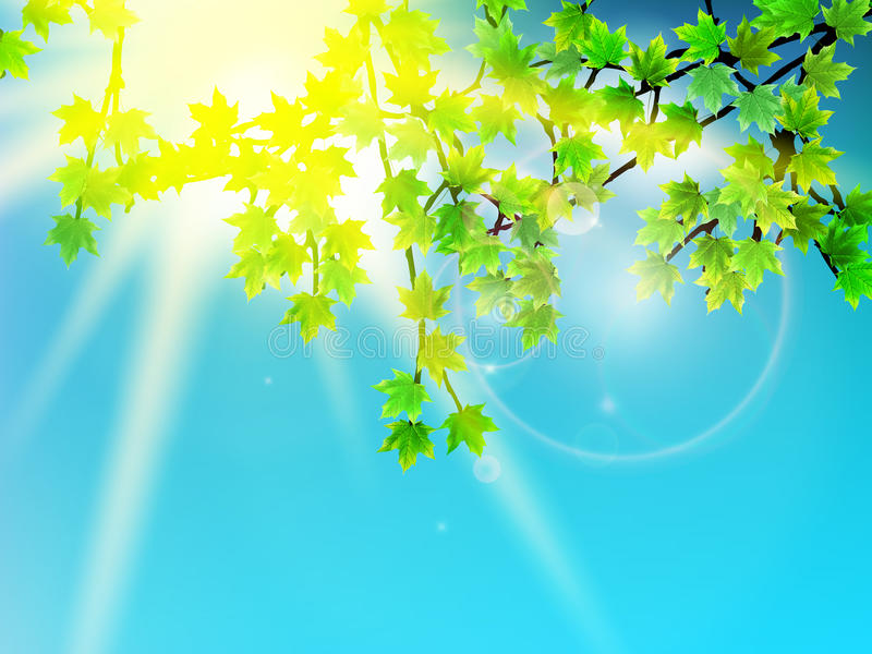 Groene bladeren met zonstraal. stock illustratie