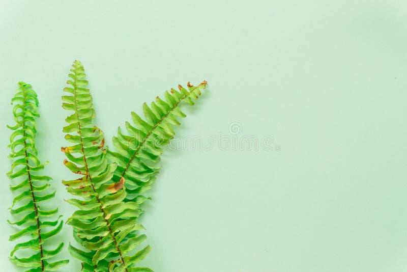 Groene bladeren minimaal op groene achtergrond royalty-vrije stock foto