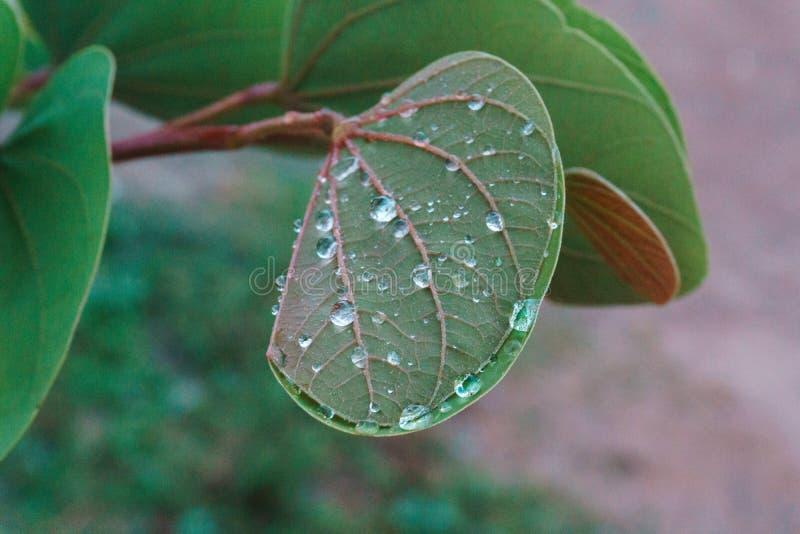 Groene bladeren nat door de regen stock foto's