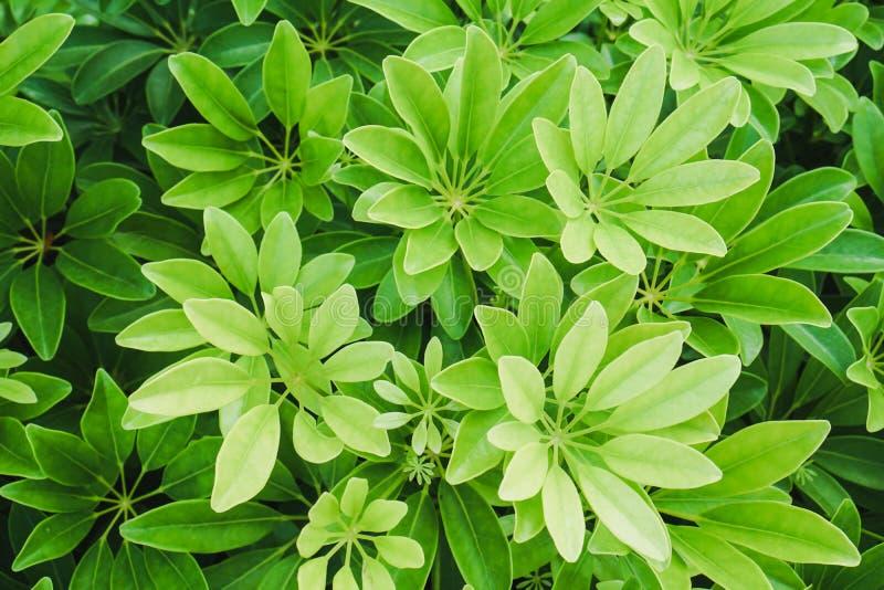Groene bladeren in ochtend op bloempot Zwerm velen stock afbeelding