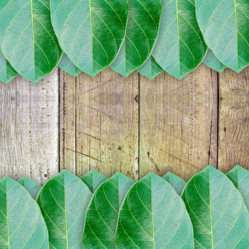 Groene bladeren op houten muurachtergrond stock afbeelding