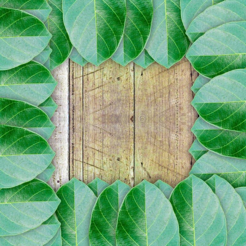 Groene bladeren op houten muurachtergrond royalty-vrije stock foto