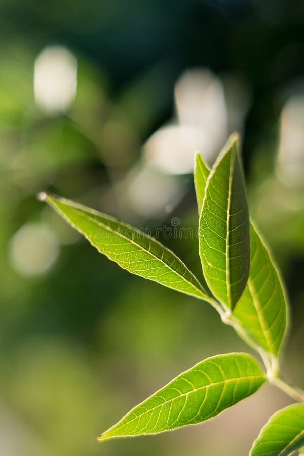 Groene bladeren op onscherpe achtergrond stock fotografie