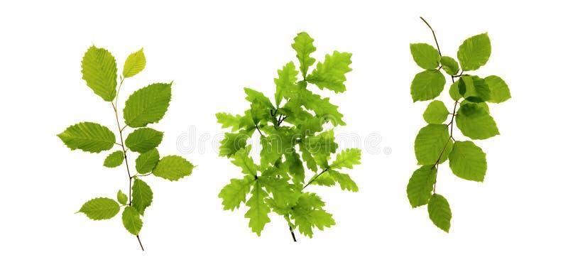 Groene Bladeren op Wit royalty-vrije stock foto