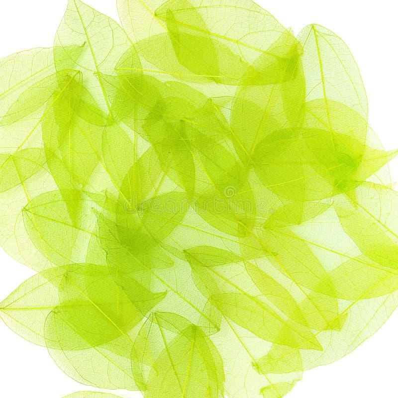 Groene bladeren op wit. De achtergrond van de lente royalty-vrije stock afbeelding