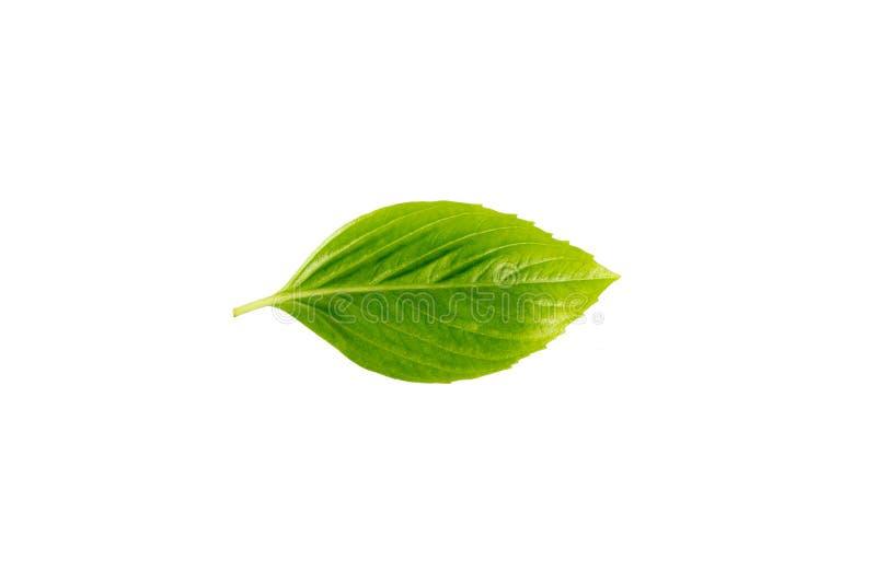 Groene bladeren op witte achtergronden royalty-vrije stock foto's