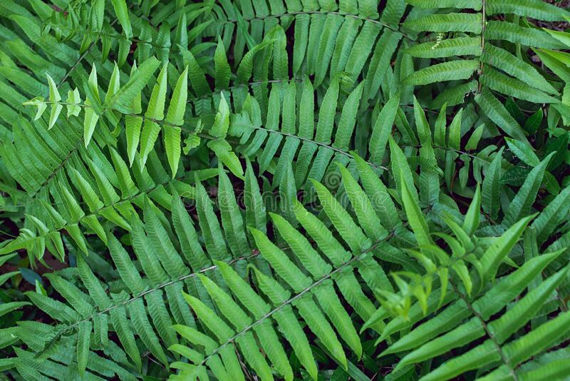Groene bladeren, groene textuur voor natuurachtergrond stock foto