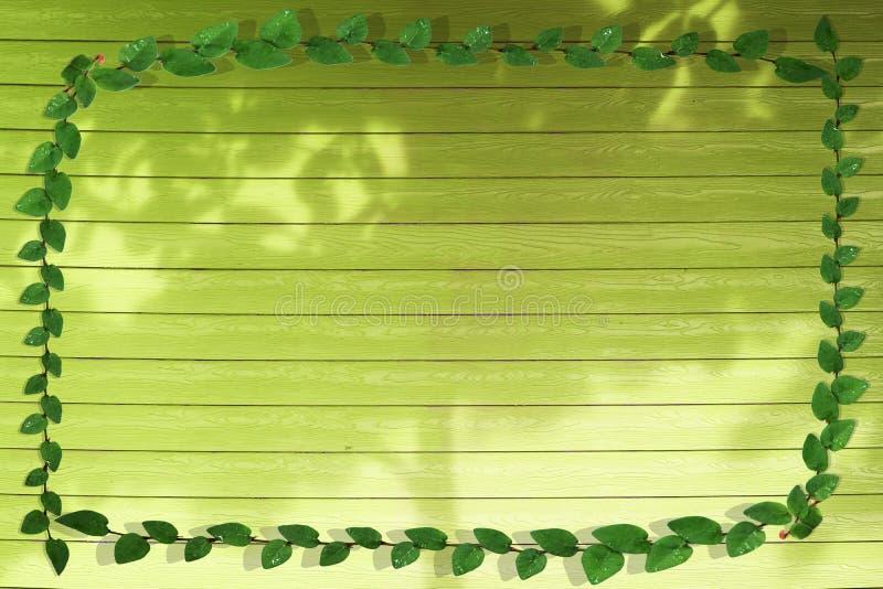 groene bladeren van aardgrens en schaduwboom op citroenhout royalty-vrije stock foto's