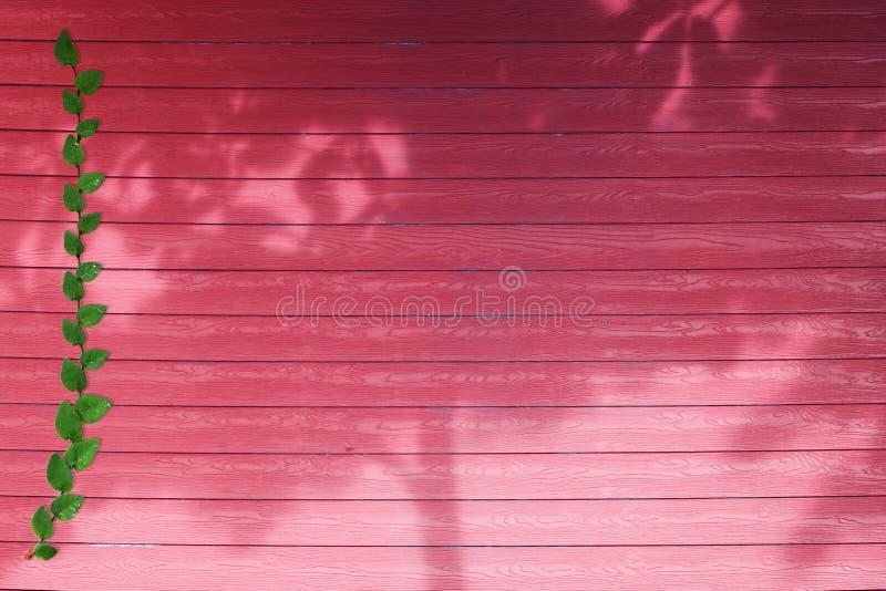 groene bladeren van aardgrens en schaduwboom op rood hout royalty-vrije stock afbeeldingen