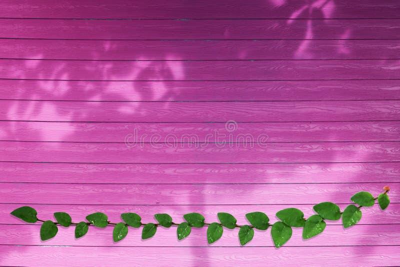 groene bladeren van Coatbuttons-aardgrens en schaduwboom op magenta hout royalty-vrije stock foto