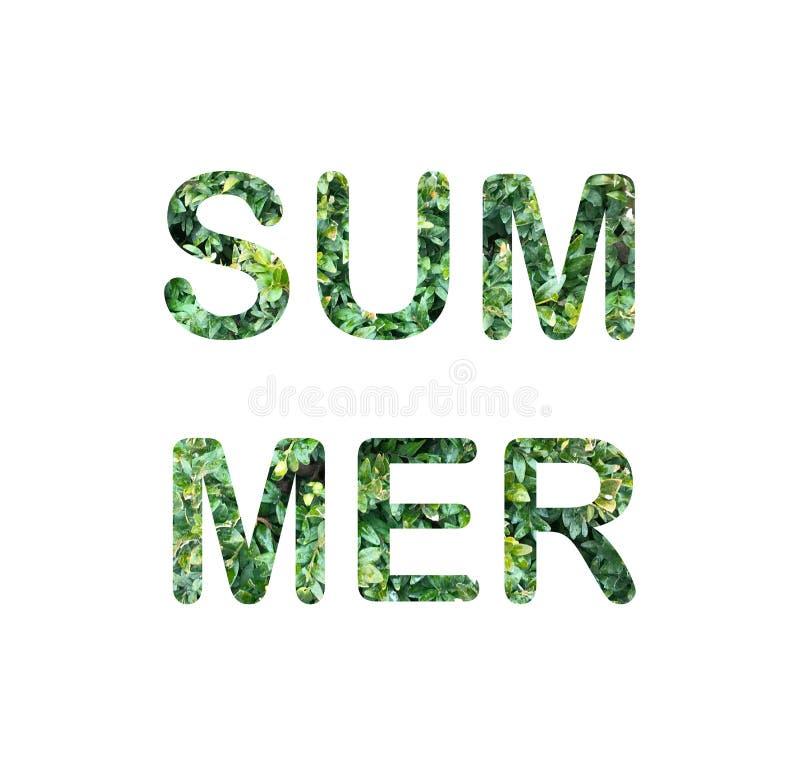 Groene bladeren van de ecologiebrieven van de bukshoutzomer Doopvont voor ontwerp, elementen decoratieve bloemen, uitnodiging stock illustratie