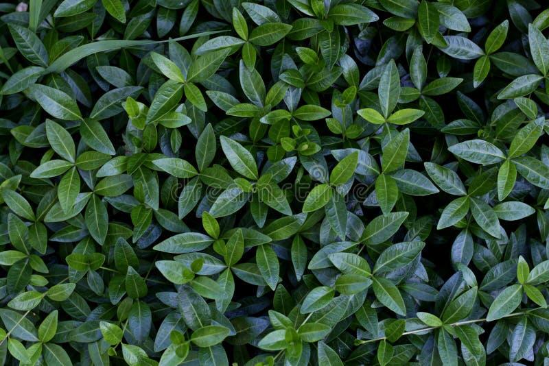 Groene bladeren van hierboven stock foto's