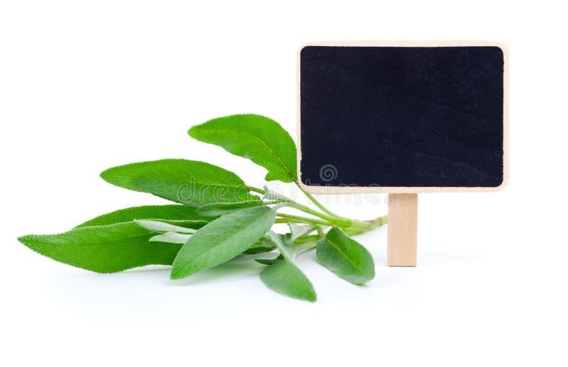 Groene bladeren van salie royalty-vrije stock afbeeldingen